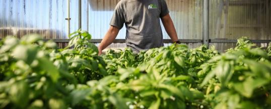 Farming As A Non-Pharma Rx For Veterans With PTSD