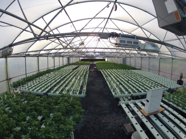 The greenhouses at Archi's Acres feature soilless, hydroponic growing systems and are automated to adjust for weather conditions.