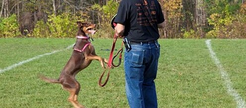 SFTT Salutes: Lance Corporal Charlton E. Johnson USMC, and his Canine Companion Aliana (Ali)