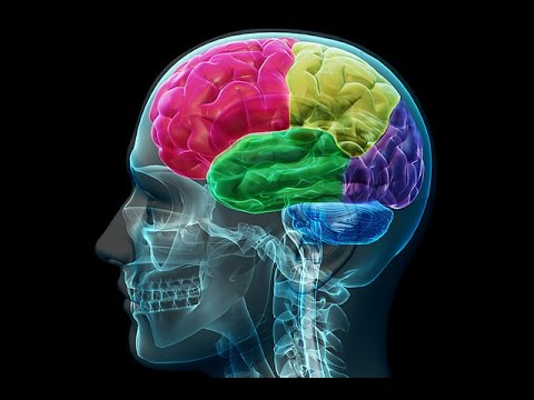 Brain size and PTSD Therapy