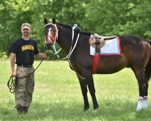 Equine Therapy for Veterans with PTSD