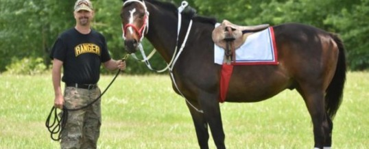 Equine Therapy for Veterans with PTSD and TBI