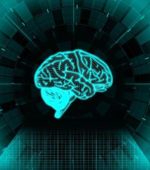 Brain and PTSD Studies